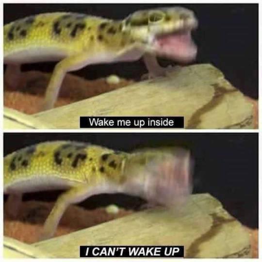 wake up - meme