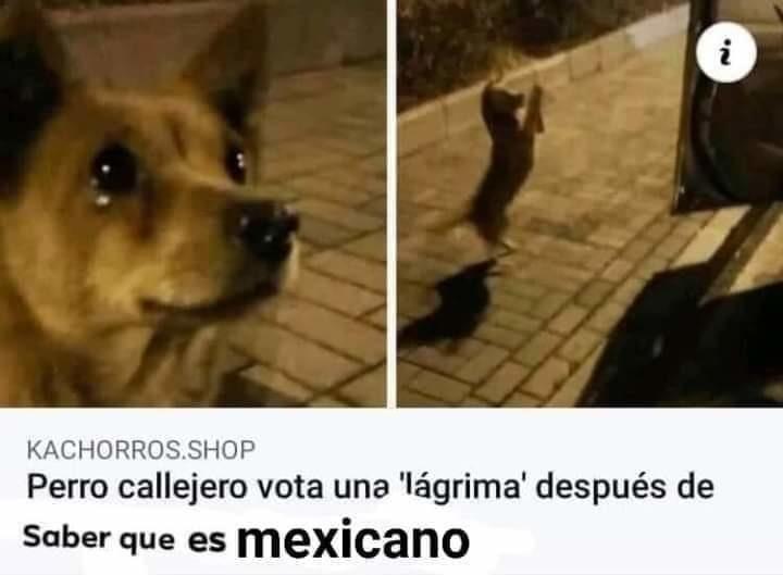 No soy mexicano *llora* - meme