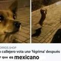 No soy mexicano *llora*