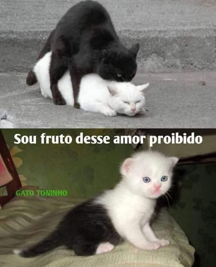 Black and white - nigga e branquelo. - meme