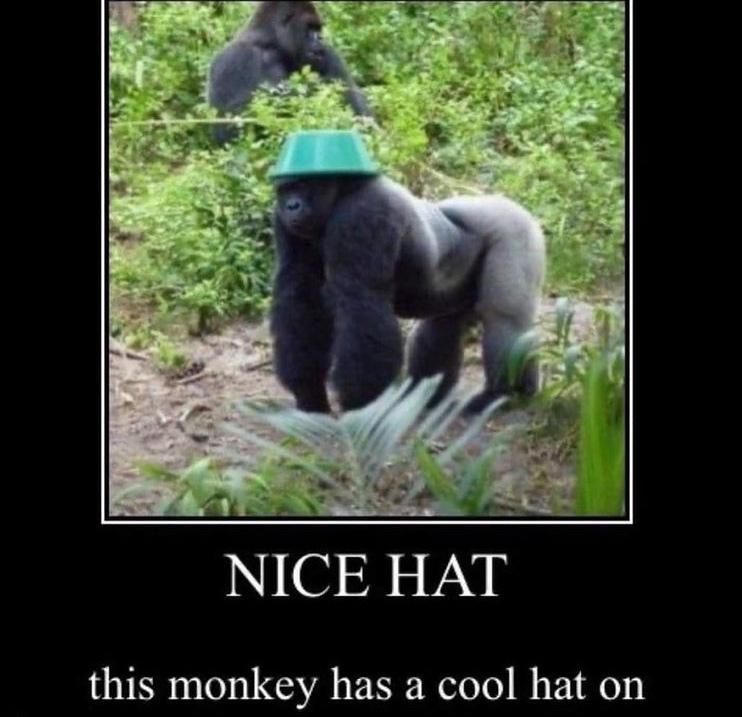 nice hat - meme