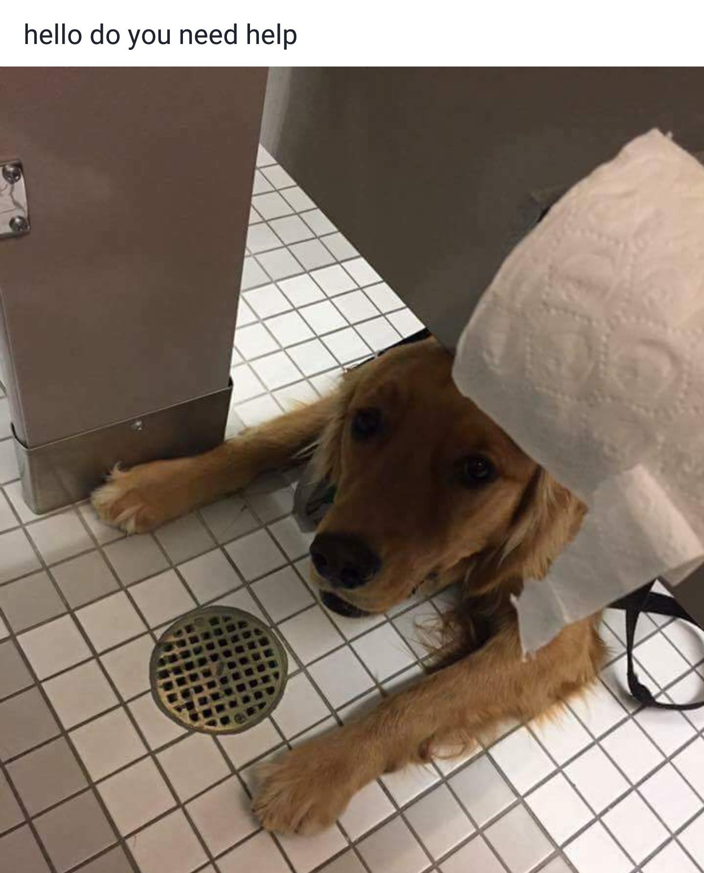 Doggo will help you poop - meme