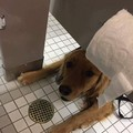 Doggo will help you poop