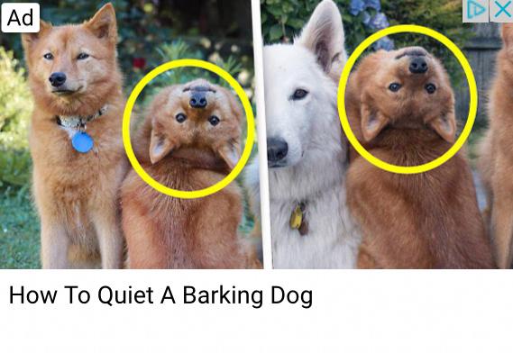 Dogge go brr - meme