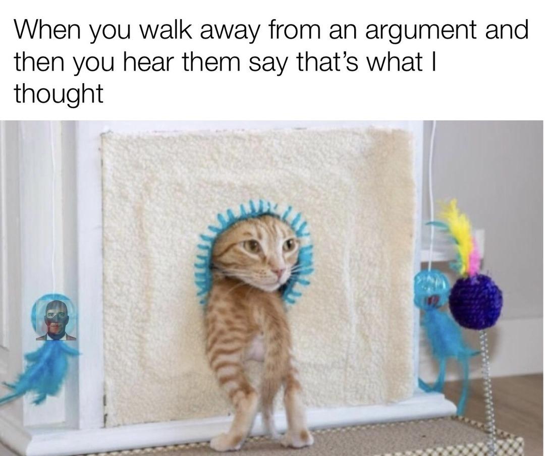 KOT - meme