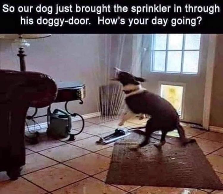 inside sprinkler - meme