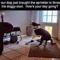 inside sprinkler