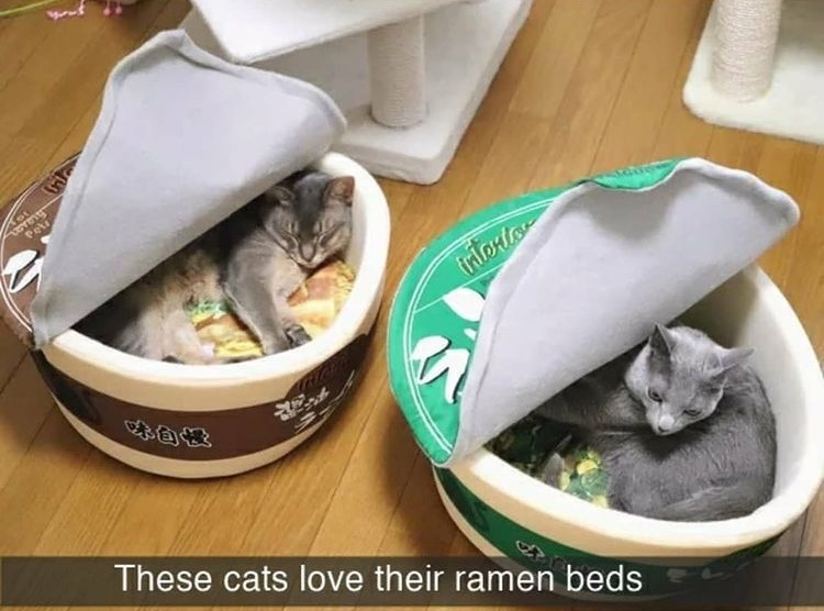 eat the pussy ramen - meme