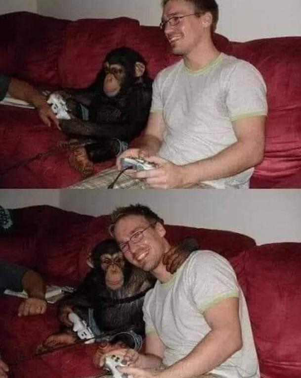 simio no mata simio - meme