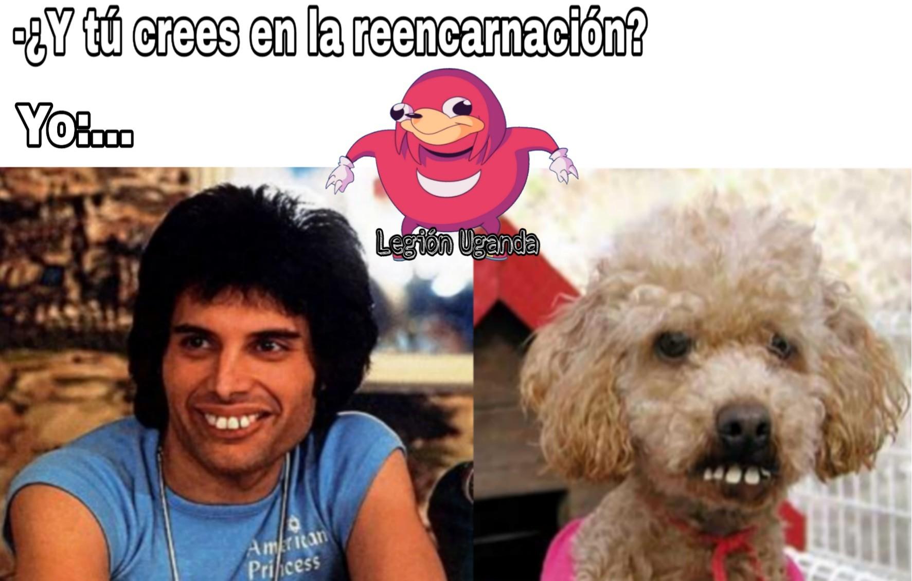 Freddie reencarnó en un perro... - meme