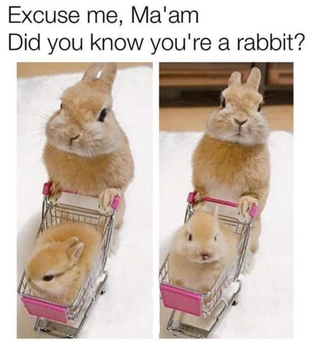 I'm just trying to do my hopping...I mean shopping. - meme