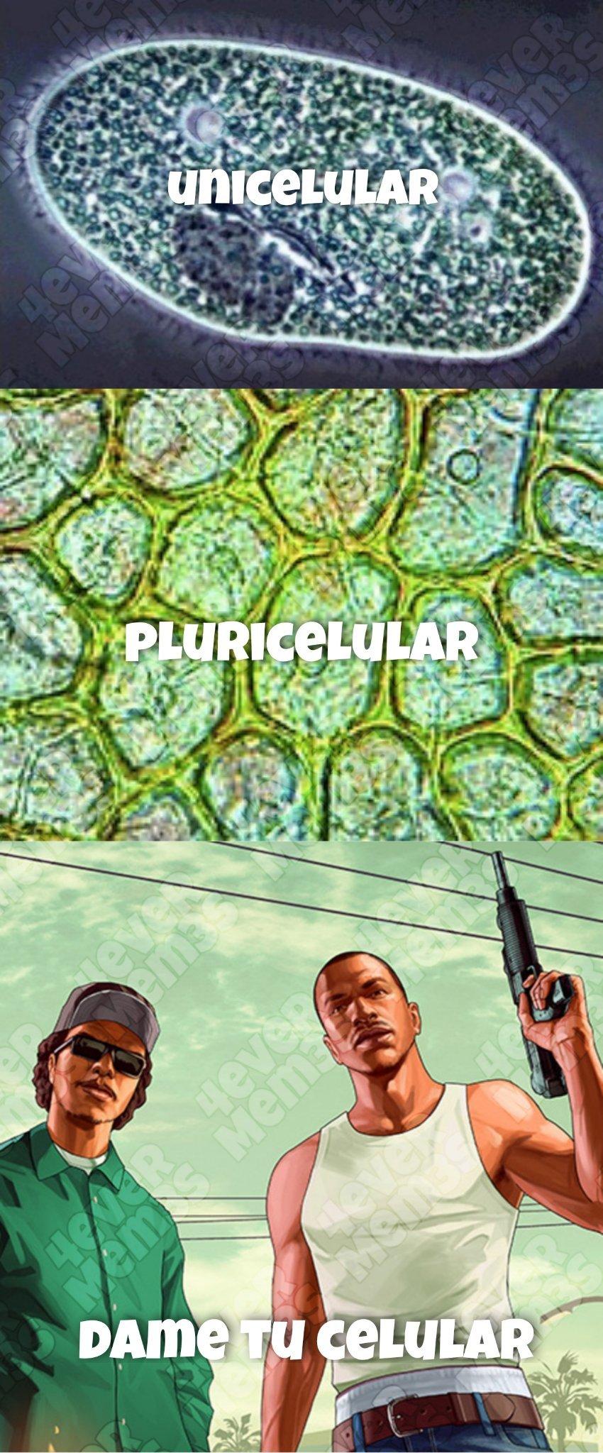 Dametucelular - meme