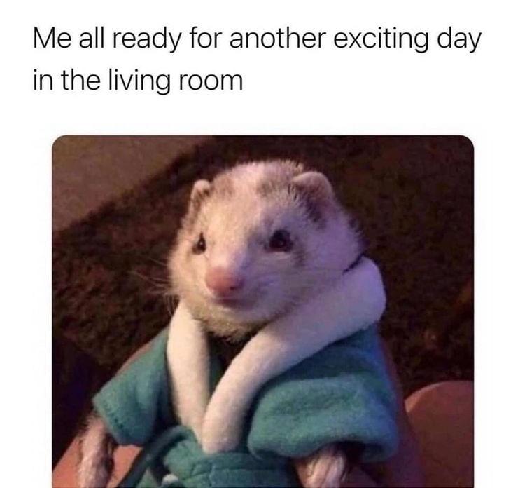 everyday corona life style - meme