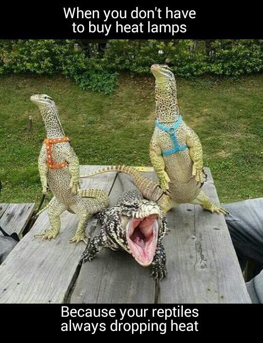 I love reptile memes