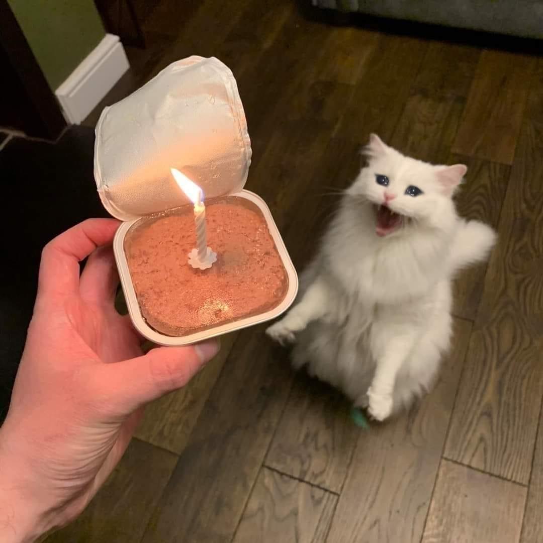 You remembered my birthday?? - meme
