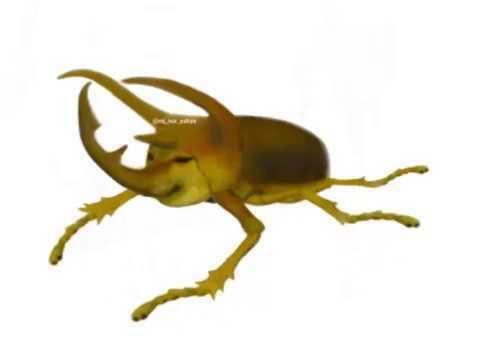 le hicieron un cheems a un escarabajo - meme