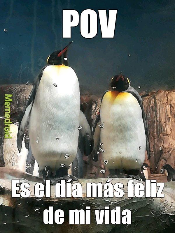 Adoro los pingüinos - meme
