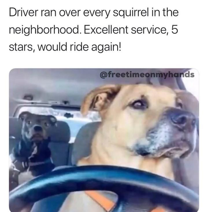 5 stars - meme