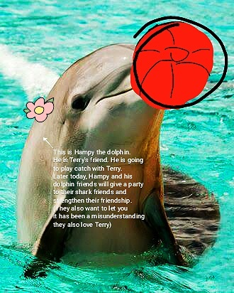 Chill guys, dolphins also love Terry ! - meme