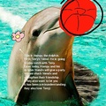 Chill guys, dolphins also love Terry !