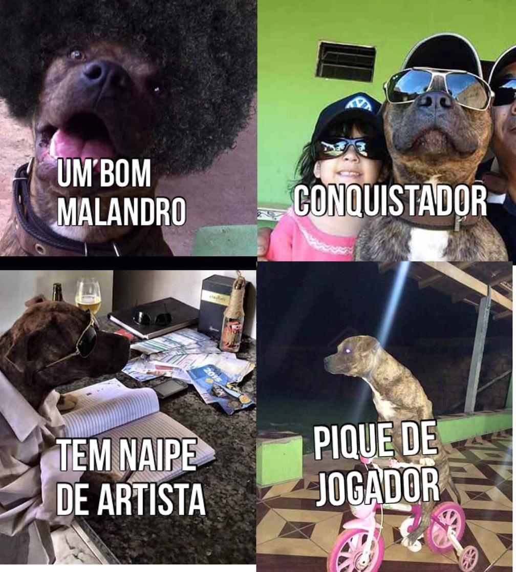 o cachorro frederico - meme