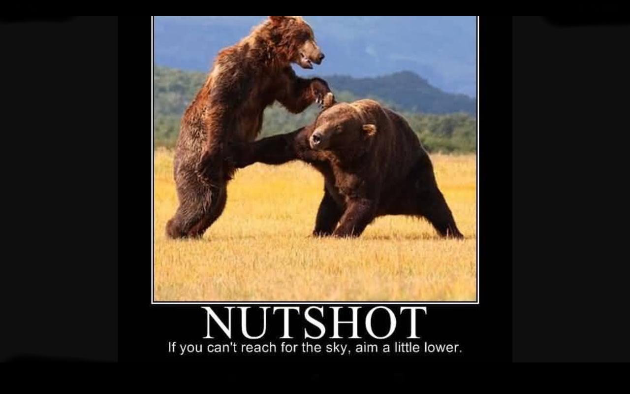 Bear - meme