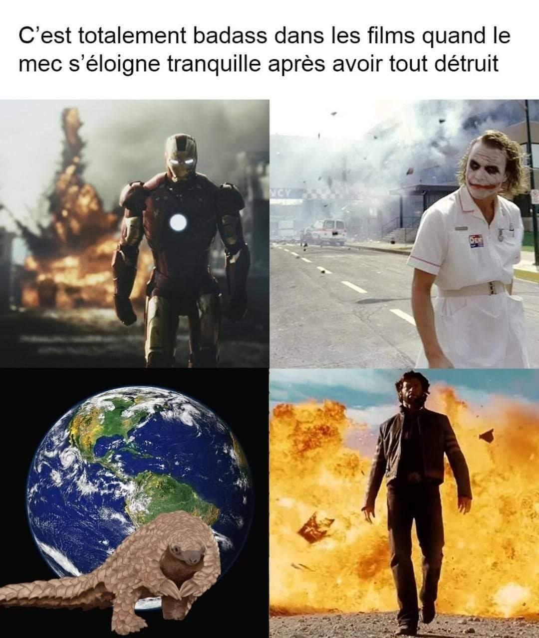 Pangolin - meme