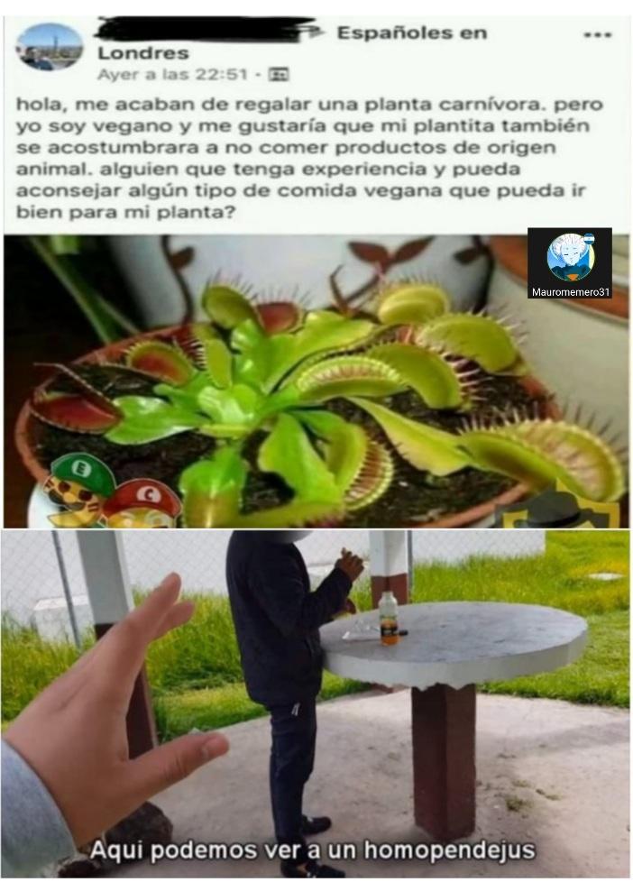 Pobre planta  ;( - meme