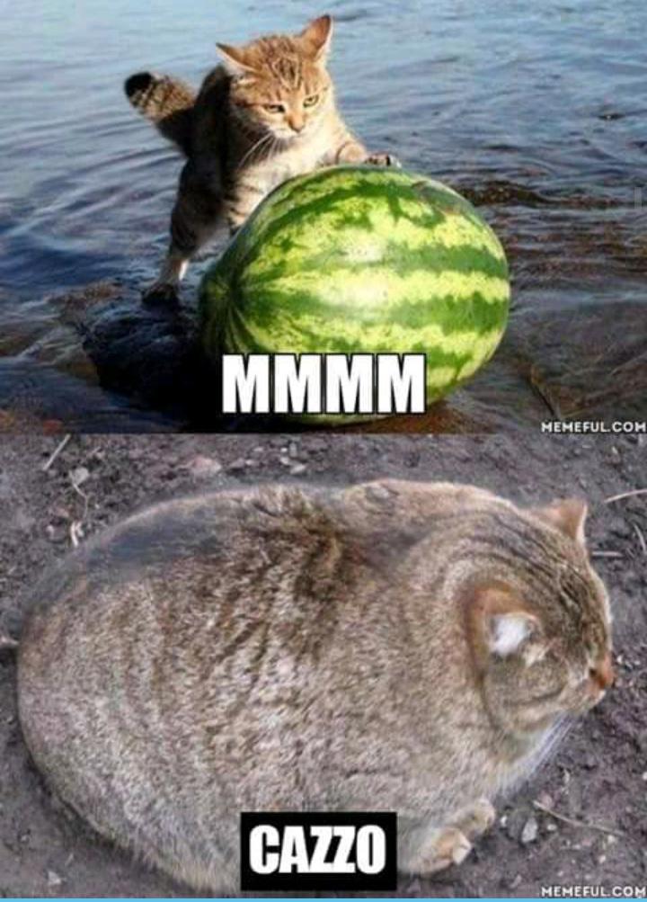 Mmmmm... - meme