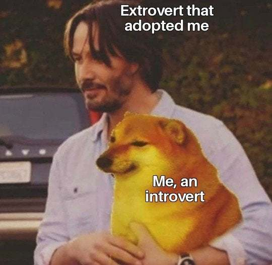 I love the extrovert that adopted me - meme