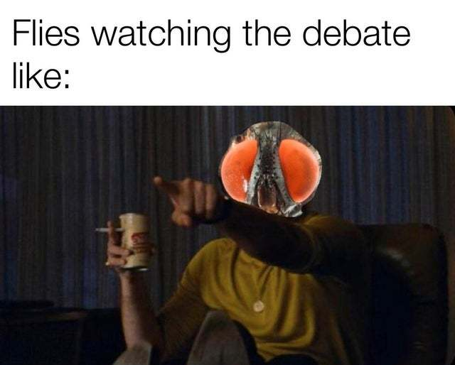 Flies watching the debate like - meme