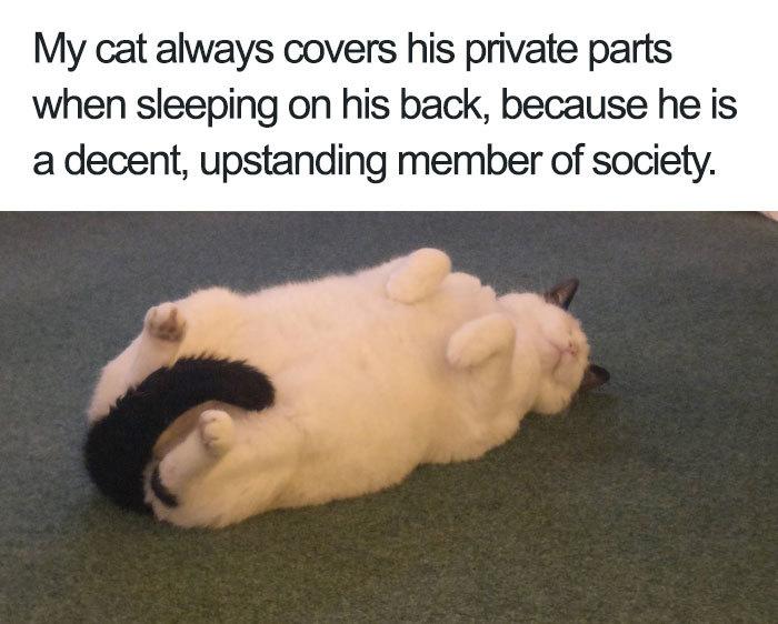 cat with decency - meme