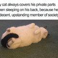 cat with decency