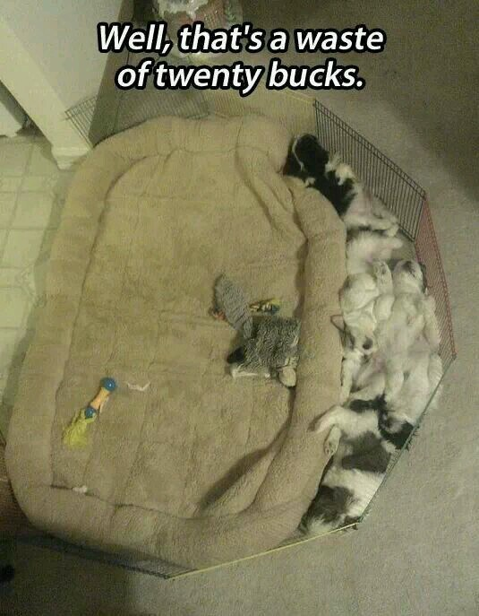 Not a single cat used the new bed - meme