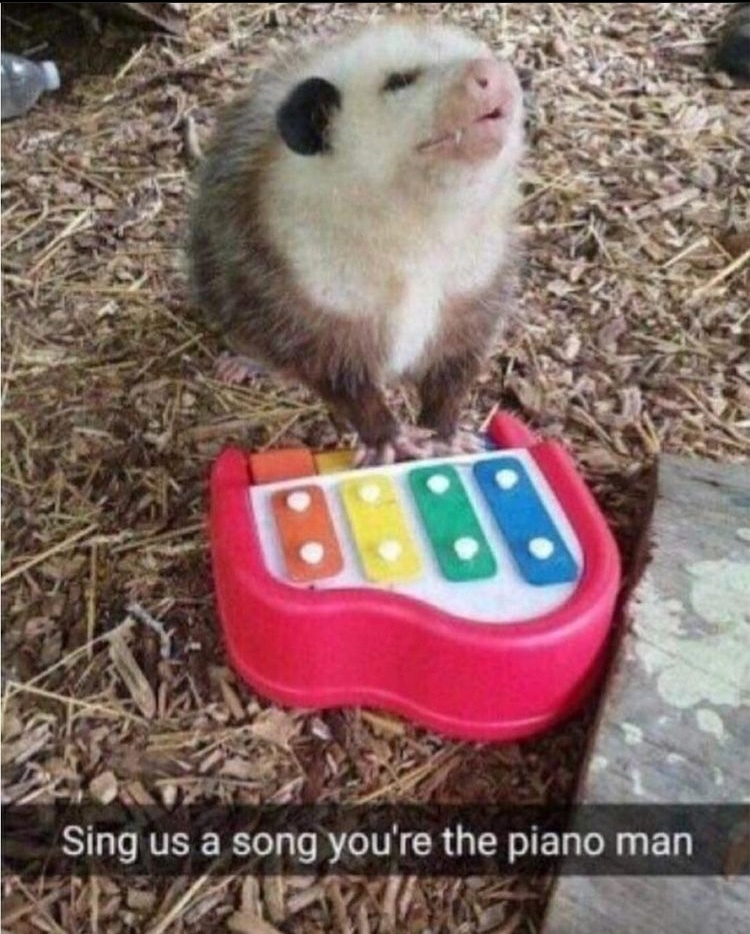 give us a song tonight sing us a melody - meme