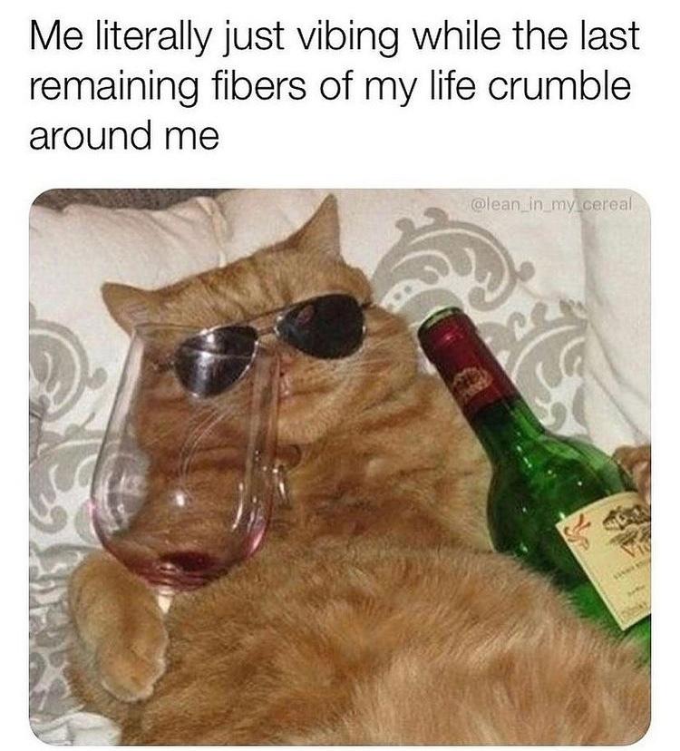 cool cat - meme