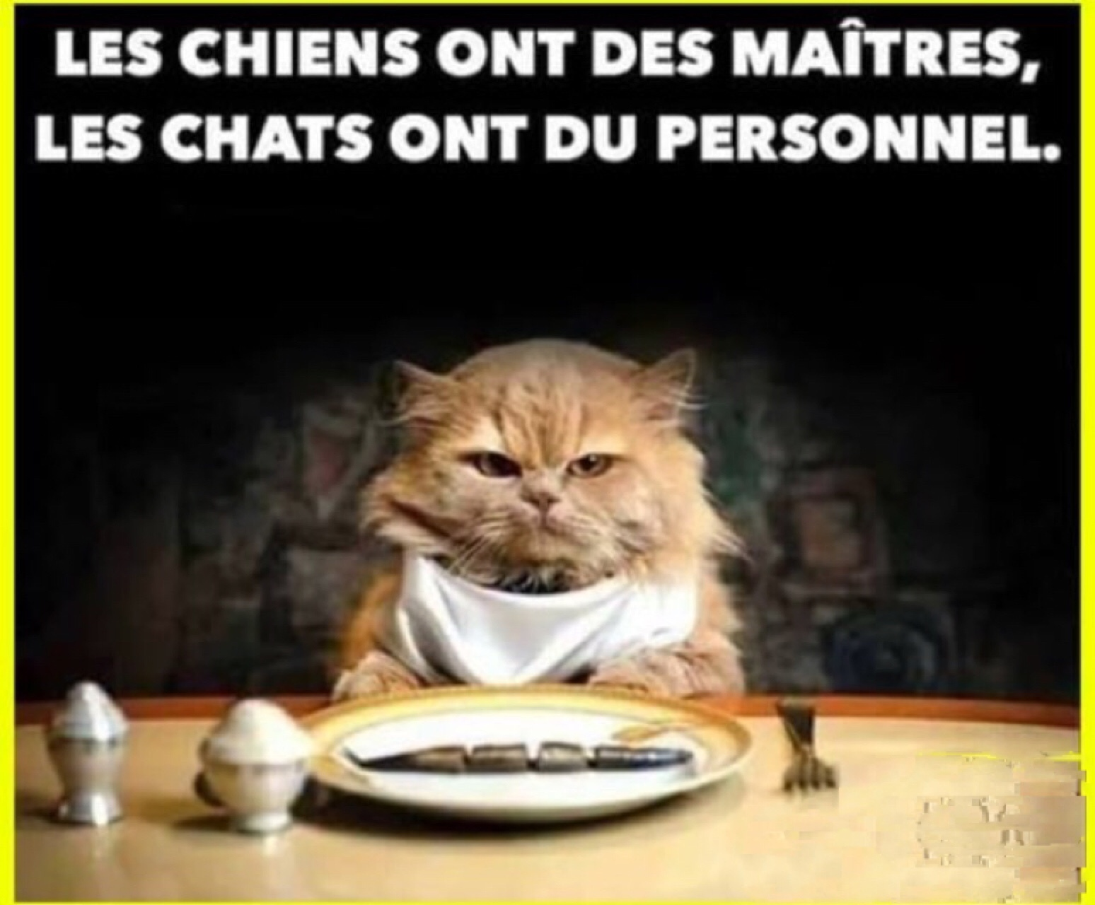 Chien et chat meme by bloodydeath101 memedroid - Com chien et chat ...