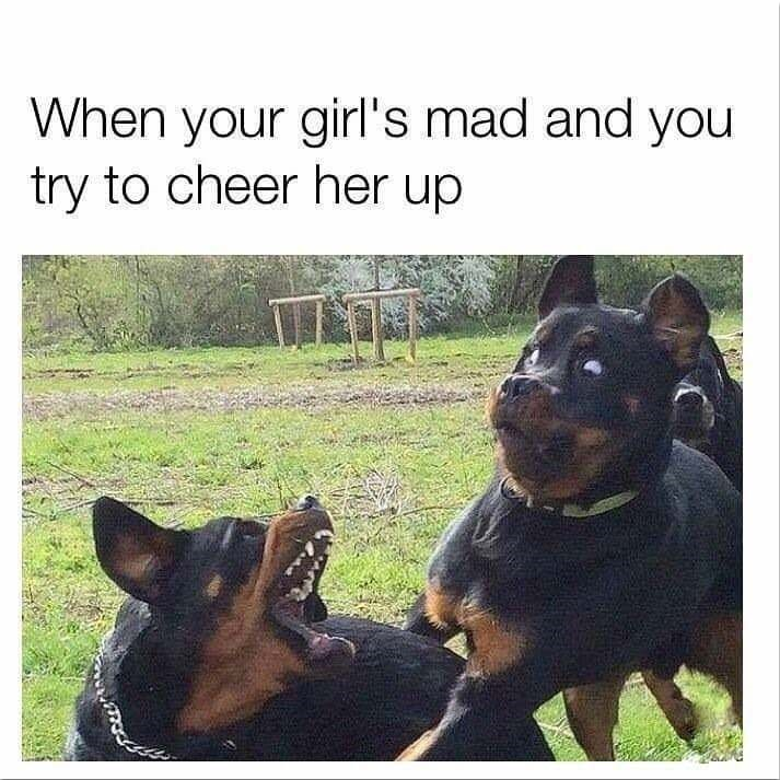 Bf And gf doggos - meme
