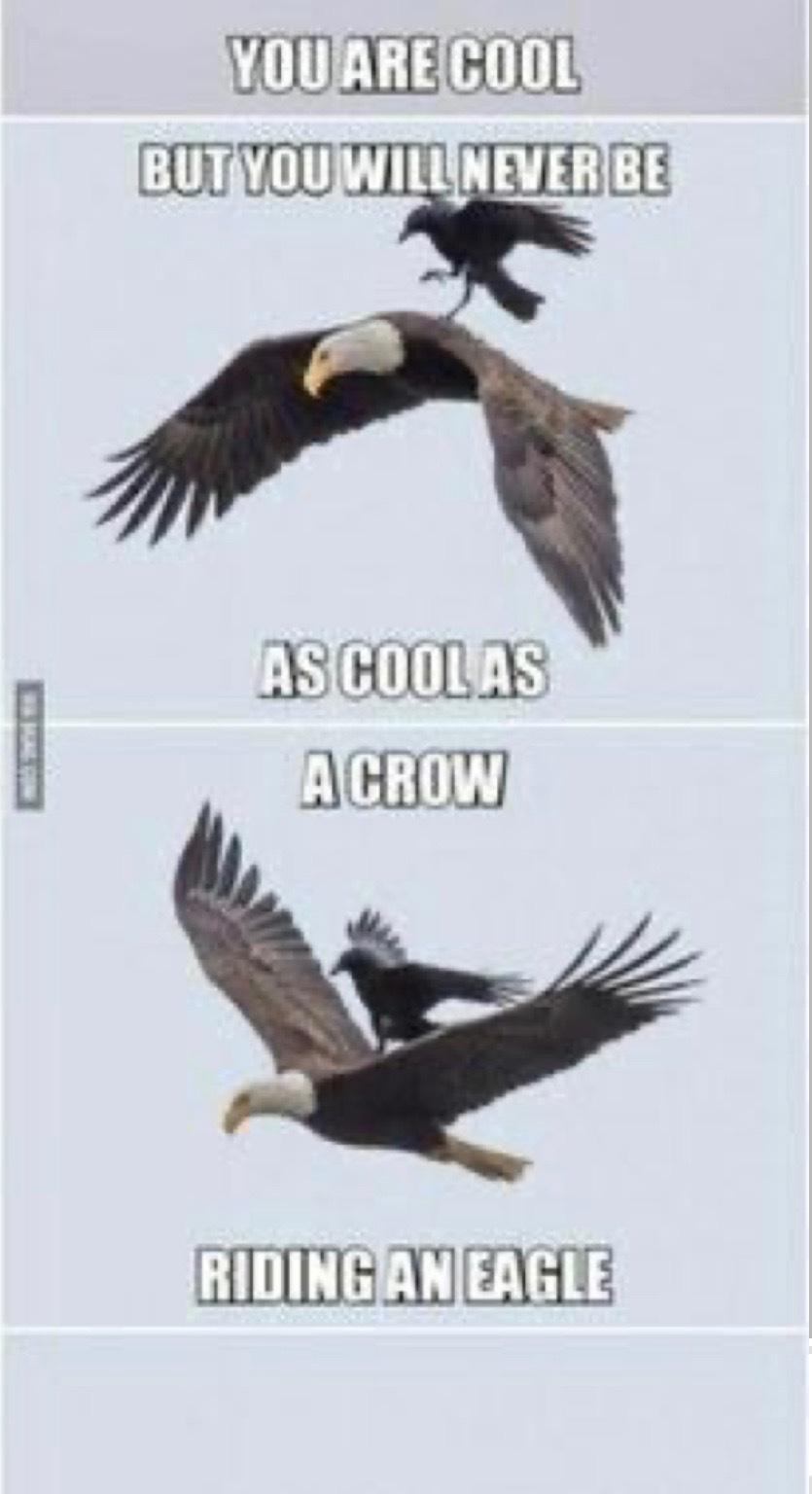 Eagle - meme