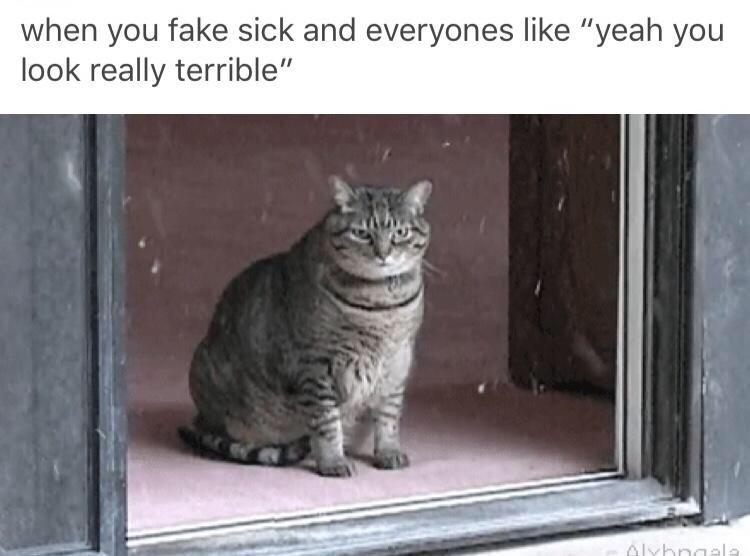 you look terrible - meme