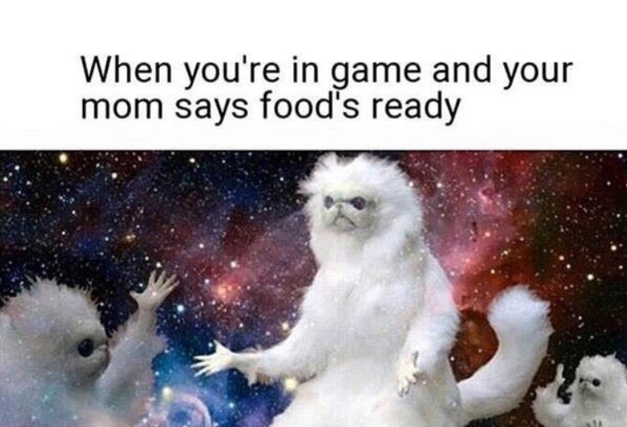 I like that cat - meme