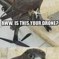 F*CK YOUR DRONE