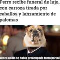Funeral perro