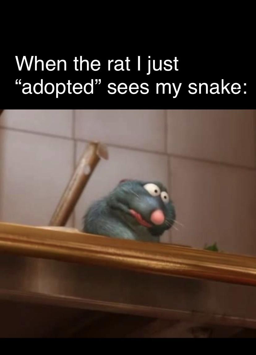 Gotta love snakes - meme