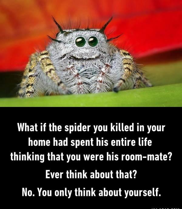 Hate spiders. - meme