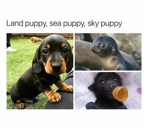 what about fire puppy - meme