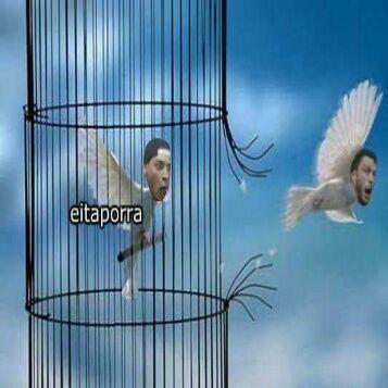 O pombo ta saindo da jaula ! PRUUU - meme