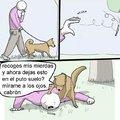 Bien perro