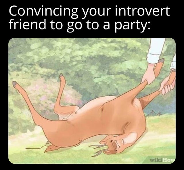 How to convinve your introvert friend to go to a party - meme