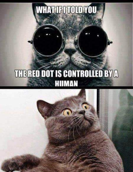 Meowtrix - meme